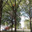 Porch Pro Headshot Arbor Tech Tree & Landscaping