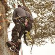 Porch Pro Headshot Baker Tree Service