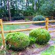 Porch Pro Headshot Conqueror Fencing & Decks