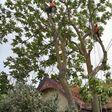 Porch Pro Headshot Falgout Tree Service