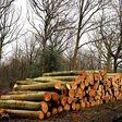 Porch Pro Headshot J's Tree Service and Landscape