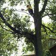 Porch Pro Headshot Jones Tree Service