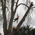 Porch Pro Headshot RISKE TREE CARE